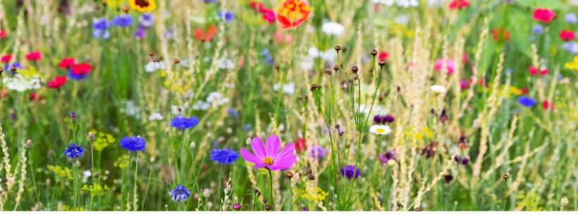 5 Must-Dos For An Eye-Popping Spring Garden